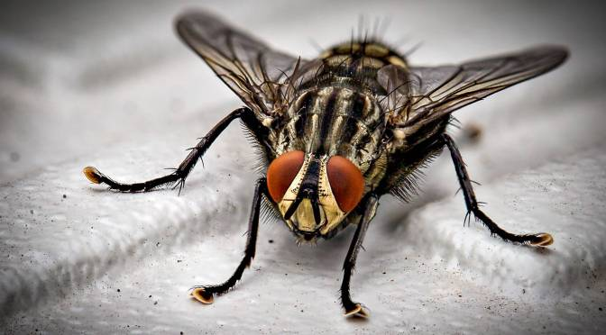 what a Beautyful, ordinary FLY!