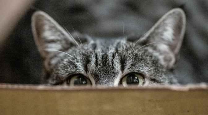 Was ist – Gesundes Katzenverhalten?
