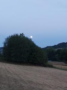 der vollmond erscheint hinter den Bäumen, über dem Berg. Im Vordergrund ein abgemähtes Weizenfeld. Es dämmert schon, ist aber noch nicht dunkel. August 2020
