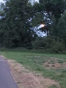 Der Vollmond leuchtet in voller Pracht zwischen den Bäumen hervor, obwohl es immer noch hell ist. Die Dämmerung setzt aber langsam ein. August 2020