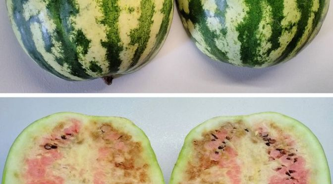 Watermelon Poisoning